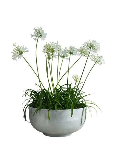 Ida Linea Hildebrand Castle Plant Pot